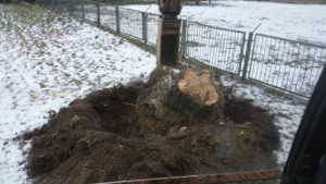 wyrywaniu i wykopywaniu korzeni drzew